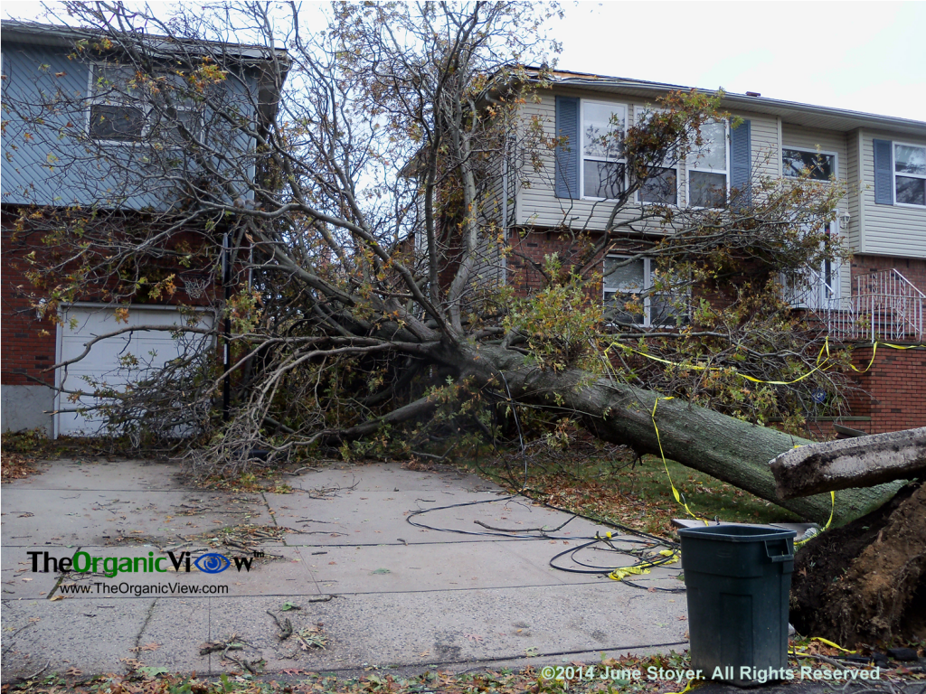 Tree crashes in driveway from Hurricane Sandy